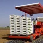Trasplantadora y acolchadora de Ferrari puede sembrar 5 mil plantas por hora