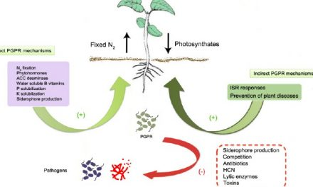 Biological Control of Some Plant Diseases Using Different Antagonists Including Fungi and Rhizobacteria