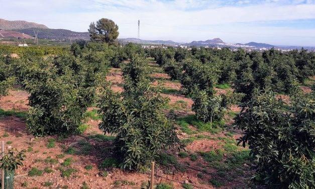 El huerto local valenciano