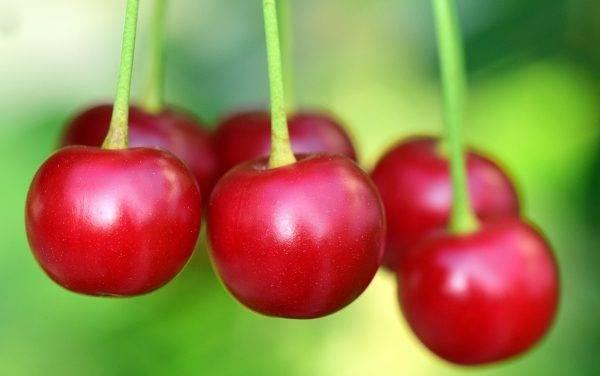 Factores que afectan la calidad de las cerezas dulces y los compuestos que promueven la salud
