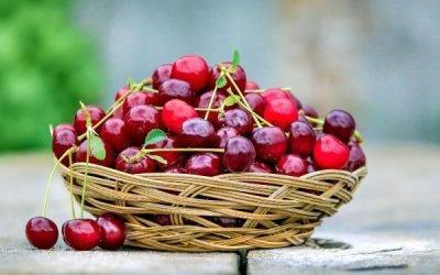 Manejo, cosecha y poscosecha de cerezas