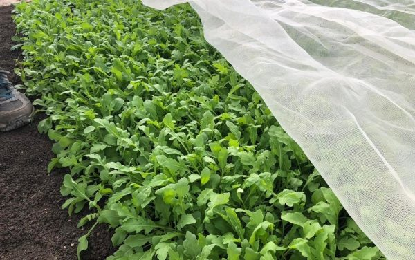 Las mallas de Arrigoni, un excelente aliado para la agricultura del orgánico