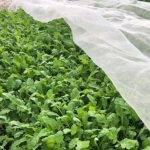 Las mallas de Arrigoni, un excelente aliado para la agricultura orgánica