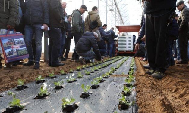 Demostraciones en el campo: exposición de mecanización hortícola y seminarios en hortalizas