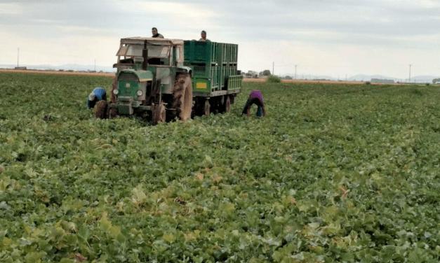 Castilla-La Mancha, un espacio para la diversificación de la horticultura
