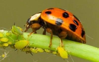 Piden aceptar a los agentes biológicos para proteger los cultivos