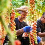 GreenTech Americas Conference helps Latin American growers to optimize their cultivation