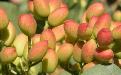 Tradecorp colabora en las II Jornadas sobre almendro y pistacho