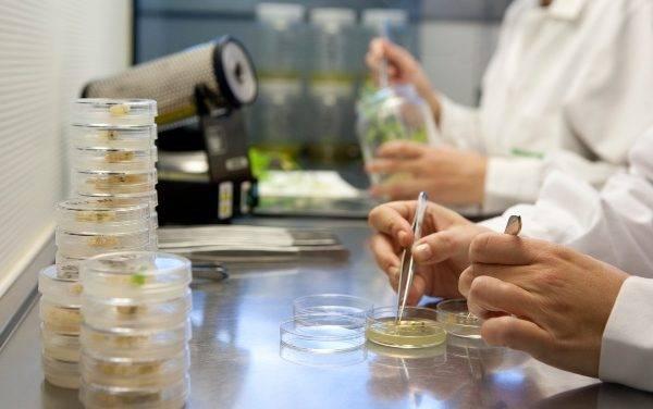 Semillas Fitó acelera proceso de obtención de nuevas variedades de cucurbitáceas