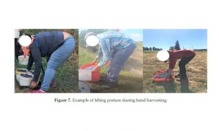 Research on the risk factors of MSDs for several types of blueberry harvesting