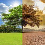 Truco de las plantas para adaptarse al cambio climático