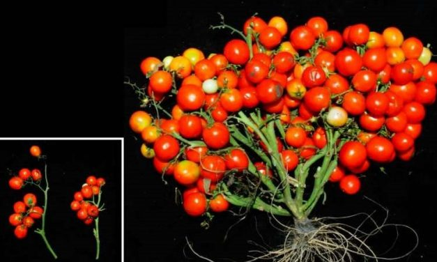 Research to Engineer Crops That Can Be Grown in Urban and Other Environments