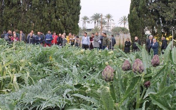 Gestión integrada de plagas en el cultivo de la alcachofa