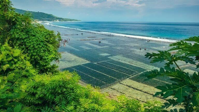 Las algas son muy saludables, nutritivas y eficientes en su uso como alimento vegetal