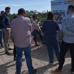 Nunhems y las tendencias globales en el consumo de alcachofa