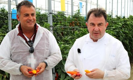Famoso chef visita el Centro de Investigación de Sakata en Vícar