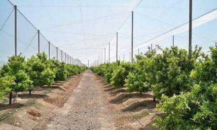 Control del Huanglongbing con mallas anti-insectos y manejo de riego y nutrición