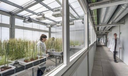 Cultivos resistentes a la sequía para asegurar el abastecimiento alimentario