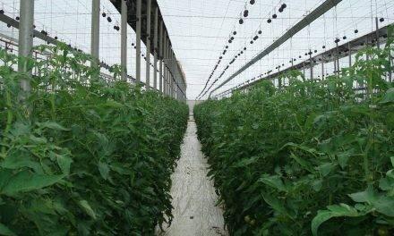En 2019, los invernaderos de Almería aumentaron las superficie y producciones