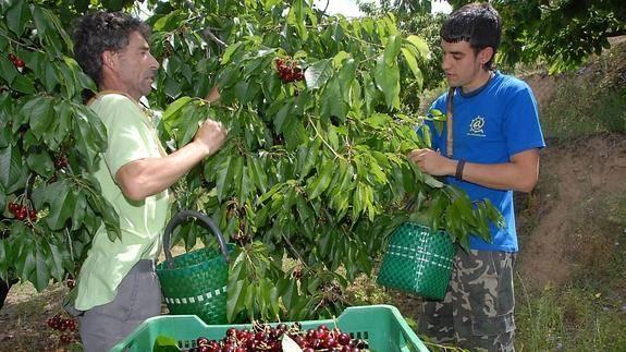 Bolsa de Trabajo para facilitar la recolección de frutas y hortalizas