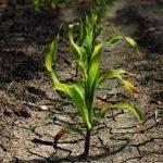 Detección de estrés en plantas gracias a nanosensores en sus hojas