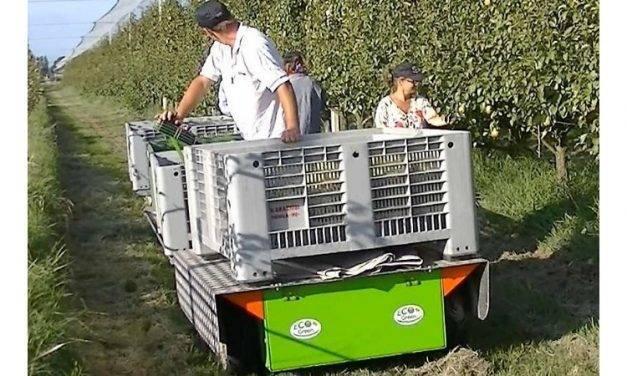 Ecogreen Italia presenta su línea Helpy, una plataforma eléctrica para recolección, poda y transporte de frutas