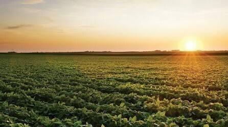 Científicos descubren mecanismo de las plantas para protegerse ante excesos de luz solar