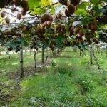 El dilema de los cultivos menores y su importancia