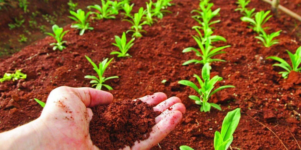 El calentamiento global y su efecto en el aumento de patógenos del suelo