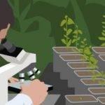 La ISF facilita el movimiento de semillas de calidad por todo el mundo