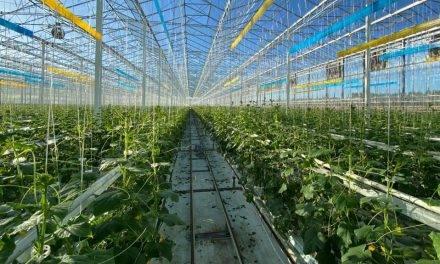 Alta tecnología para la horticultura local