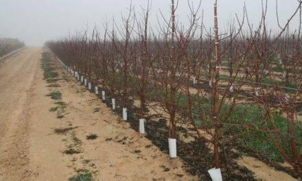 El mercado de frutos secos, nuevos desafíos para satisfacer el creciente consumo