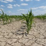 Hormone that helps plants retain water