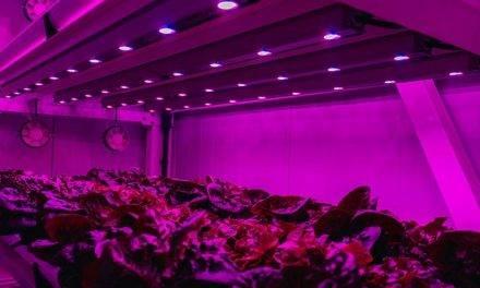 Agricultura vertical, una tendencia cada vez más sustentable