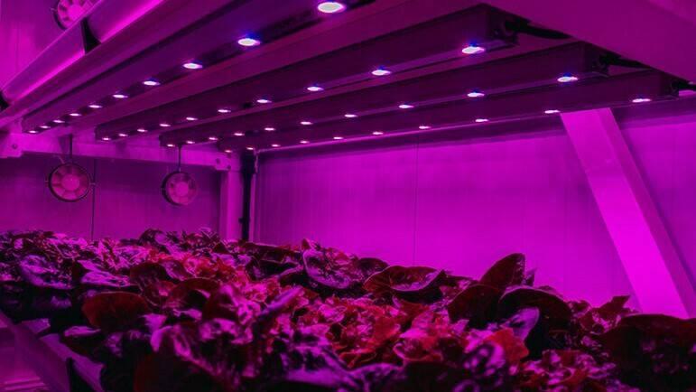 Etifa organiza un webinar sobre iluminación en Vertical Farming