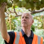 Award for the scientist developing the popular Zespri™ SunGold™ Kiwifruit