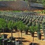 El fanatismo por las plantas, uno de los efectos positivos de la pandemia en Norteamérica