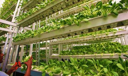 Perspectivas de la agricultura vertical, sus enseñanzas