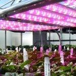El control de las plantas con diversos colores de luz