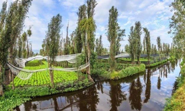 Investigar con acuaponía para promover mejoras en la plasticultura de la horticultura intensiva