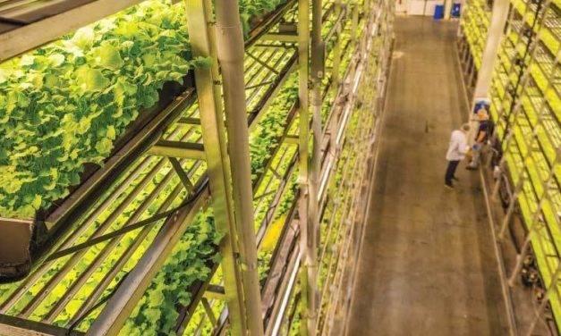 El mayor huerto de cultivo vertical se realizará en los Emiratos Árabes