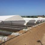 Frambuesas y arándanos: las bayas están protegidas con Robuxta® y Biorete® de Arrigoni