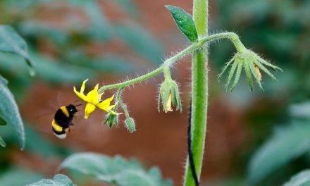 Nueva herramienta para la identificación y conteo de granos de polen