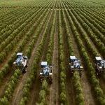 2o. pase del  documental del olivo en seto en su 25 aniversario, el 23 de julio a las 6 de la tarde