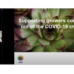 AIPH & FCI webinar defines the road to recovery for the ornamental horticulture industry