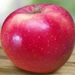 Disponible la primera variedad de manzana para afrontar el cambio climático