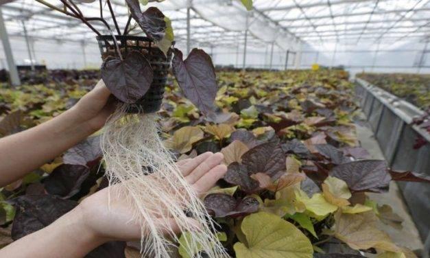 Estrategias de las plantas en el desarrollo de sus raíces