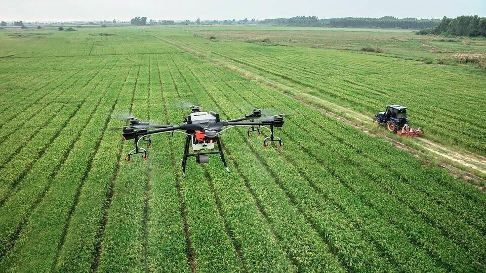 Imágenes capturadas por drones determinan el estado radicular en cultivos