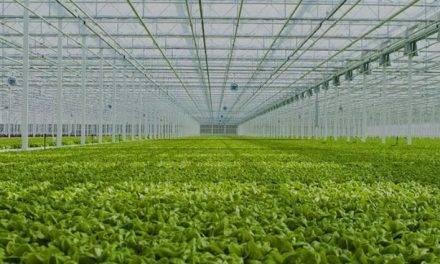 Inteligencia artificial en control climático de invernaderos