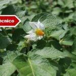 Sensores y estaciones de seguimiento climáticos para optimizar el cultivo de la patata